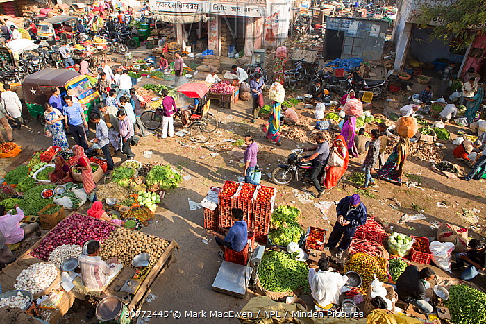Fruit and vegetable market in the Old City, Jaipur, Rajasthan, India, Indian Sub-Continent, Asia. March 2015