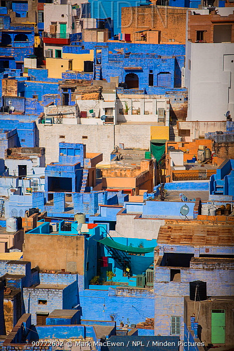 Aerial view of The Blue City, Jodhpur, Rajasthan, India. March 2015