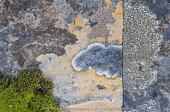 Crustose lichens (Lecanorales) on rocks in Swedish Padjelanta National Park, Laponia World Heritage Site, Sweden. August.  Highly commended in the GDT  European Wildlife Photographer of the Year  competition 2017