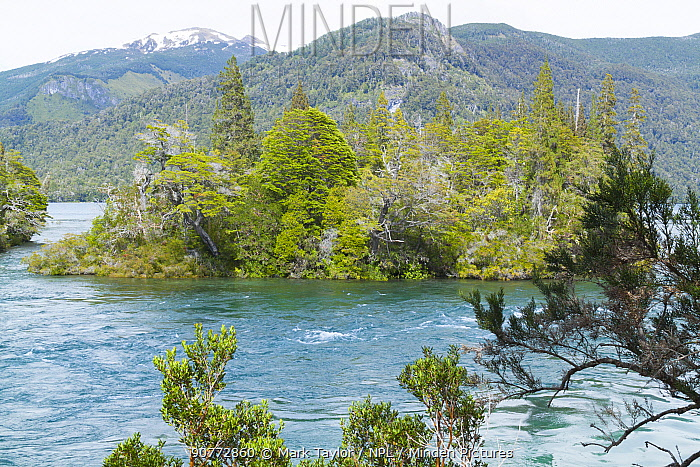 Small forested island in river, Los Alerces National Park UNESCO World Heritage Site, Argentina.