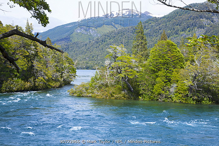 River in temperate forest, Los Alerces National Park UNESCO World Heritage Site, Argentina.