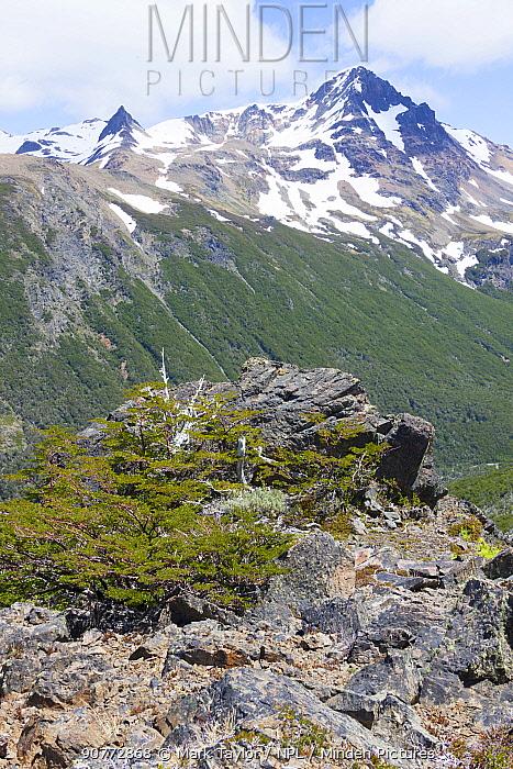 Rocky alpine view, Los Alerces National Park UNESCO World Heritage Site, Argentina.