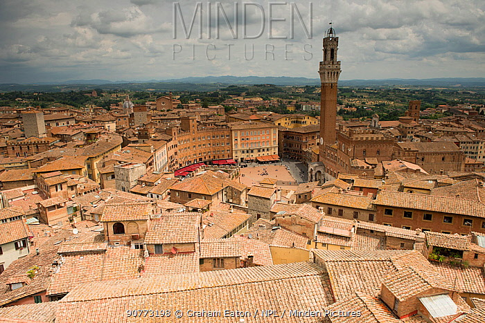 Siena and the Piazza del Campo from the roof of the Duomo, Siena UNESCO World Heritage Site, Italy. June.