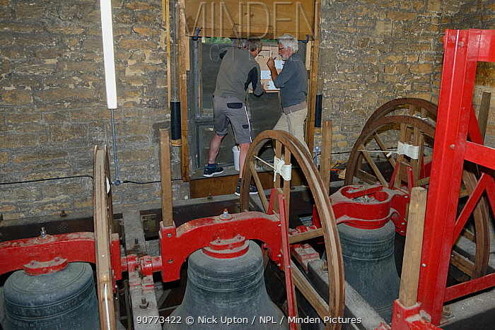 Common swift (Apus apus) nest box fitted by Roger Becket and Peter Grayshon into a louvred window in the bell tower of Holy Trinity church, Bradford-on-Avon, Wiltshire, UK, June.