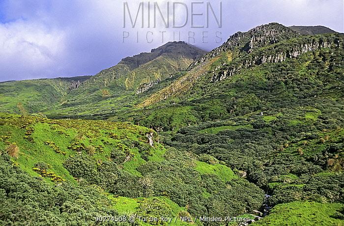 Gough Island, volcanic landscape, lowland plateau with Bog fern (Blechnum palmiforme) Gough Island, Gough and Inaccessible Islands UNESCO World Heritage Site, South Atlantic.