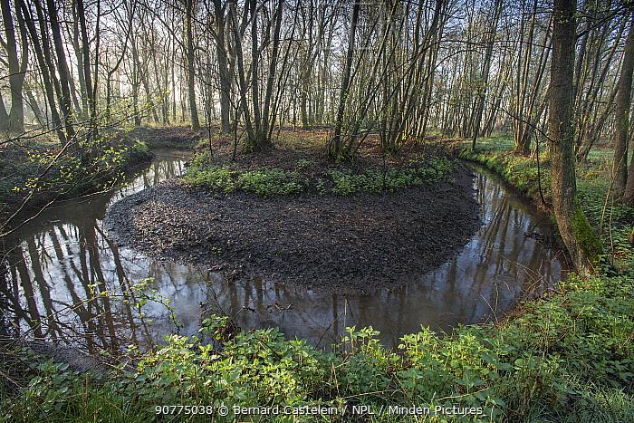 Meander in small rivulet, Groot Schietveld, Wuustwezel, Belgium, April 2017.