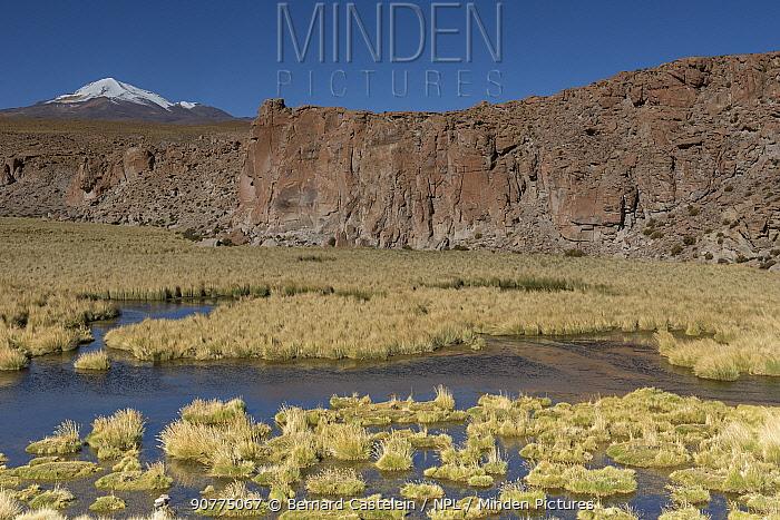 Bofedales, high altitude wetlands,  near Quetena, Altiplano, Bolivia, May 2017.