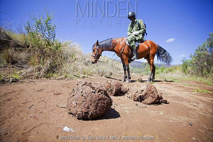 Wildlife poaching patrol on horseback noting dung whilst tracking elephant (Loxodonta africana) in Mount Kenya National Park, Kenya