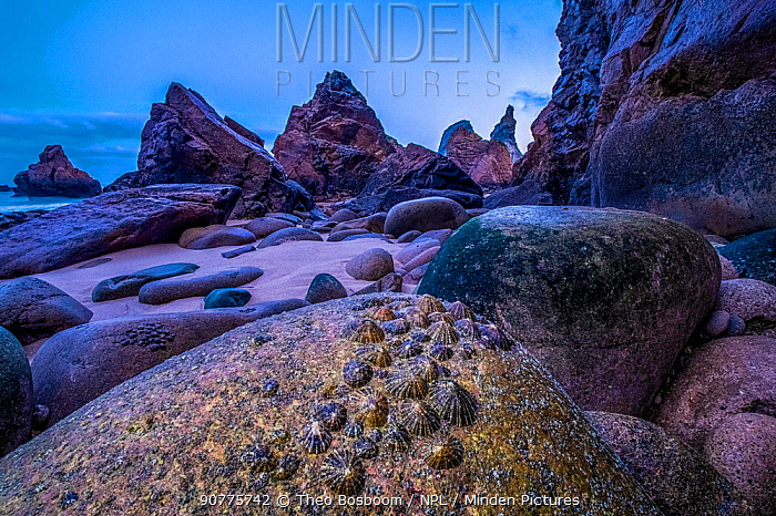 Limpets (Patellidae) exposed at low tide on the coast of Playa de Ursa, Portugal. Finalist in the Animals in their Environment Category of the Wildlife Photographer of the Year Awards (WPOY) Competition 2017.