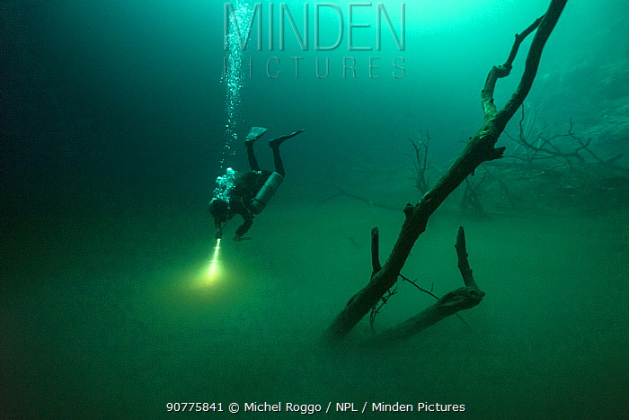 Person diving in Cenote Angelita, with a layer of hydrogen sulfate between the freshwater on the top and the seawater on the ground. Quintana Roo, Yucatan Peninsula, Mexico. Photographed for The Freshwater Project May 2016