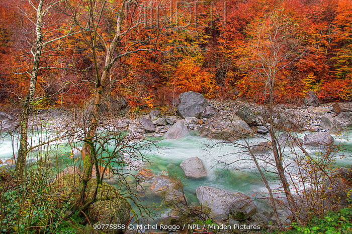 Verzasca River and autumn trees, Canton Tessin, Switzerland. November 2011. Photographed for The Freshwater Project