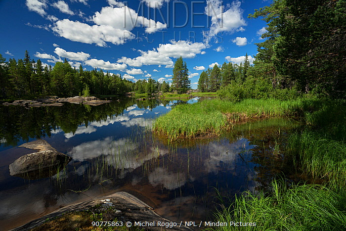 Ume River tributary, Lapland, Sweden, July 2016 . Photographed for The Freshwater Project