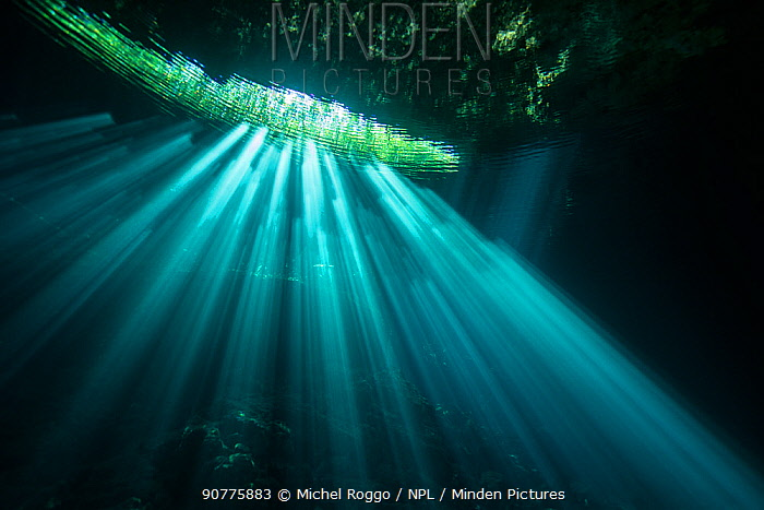 Sunrays in Cenote Jardin del Eden, Quintana Roo, Yucatan Peninsula, Mexico . Photographed for The Freshwater Project May 2016