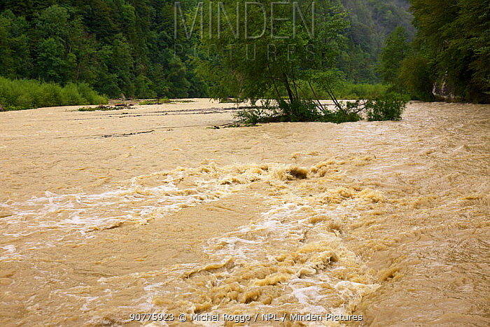Sense river in flood , Cantons of Fribourg and Berne, Switzerland, July.  Photographed for the Freshwater Project.