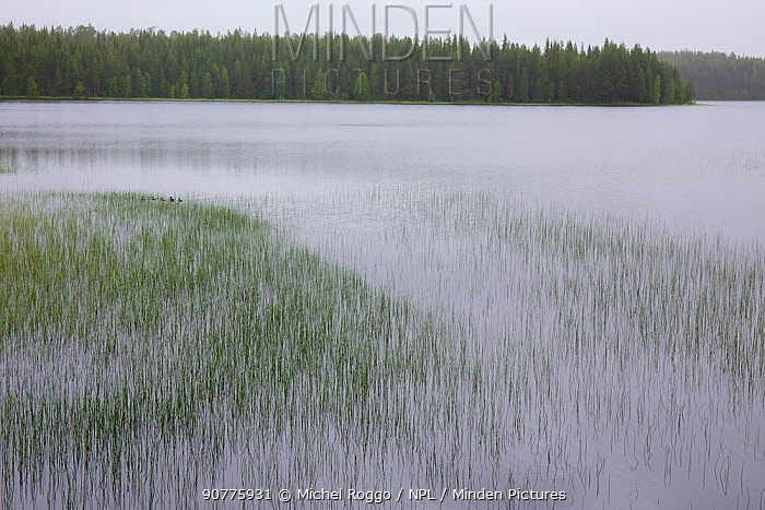 Juktan, a tributary, Ume River, Lapland, Sweden. July  2015 . Photographed for The Freshwater Project
