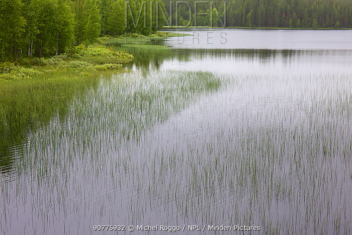 Juktan, a tributary of the Ume River, Lapland, Sweden. July  2015 . Photographed for The Freshwater Project