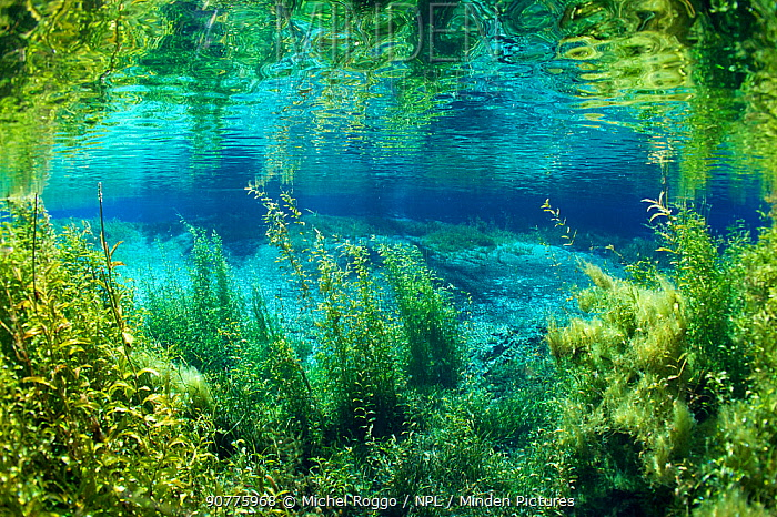 Rainbow river, Rainbow Springs State Park, Florida, USA. January. Photographed for The Freshwater Project
