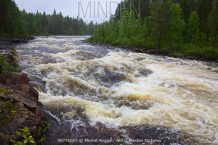 Juktan, tributary of the Ume River, upstream of Gunnarn, Lapland, Sweden July 2015 . Photographed for The Freshwater Project