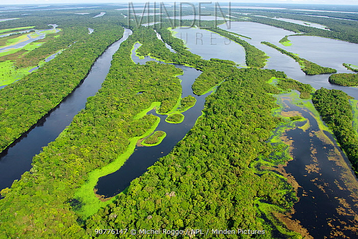 Aerial view of the flooded forest of Anavilhanas Archipelago, Anavilhanas National Park, in the Rio Negro, Amazonas, Brazil February 2011. Photographed for The Freshwater Project