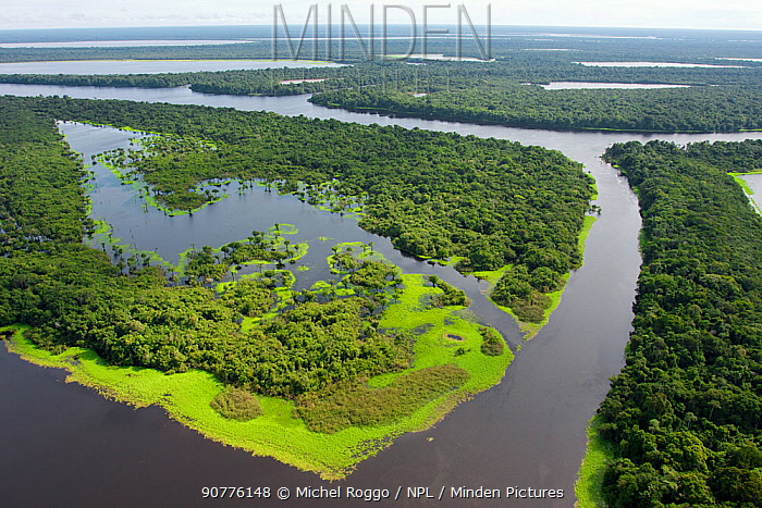 Aerial view of flooded forests, Anavilhanas Archipelago, Anavilhanas National Park, in the Rio Negro, Amazonas, Brazil February 2011. Photographed for The Freshwater Project