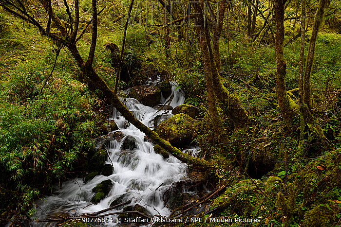 Small cascade in humid montane mixed forest, Laba He National Nature Reserve, Sichuan, China