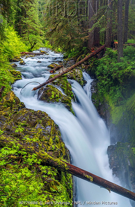 Sol Duc Falls flowing through the narrow gorge of Olympic National Park, Washington, USA. June 2017.