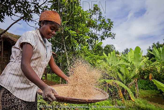 Local woman preparing rice, Andasibe-Mantadia National Park, Moramanga, Madagascar. ??May 2017