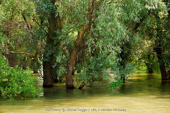 Flooded forest along the channels of the Danube Delta, Danube Delta Biosphere Reserve, Romania, May 2014. Photographed for The Freshwater Project
