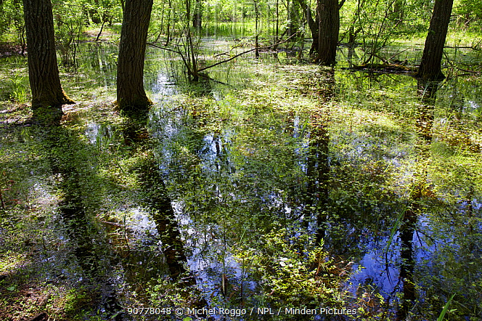 Grindul Letea or Letea forest, partially flooded in spring. Danube Delta Biosphere Reserve UNESCO World Heritage Site, Danube Delta, Romania May 2015 . Photographed for The Freshwater Project