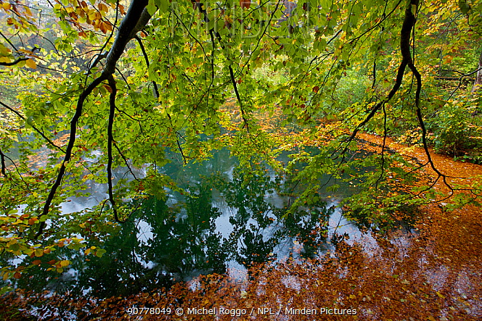 Trees over water with fallen leaves, Lake Plitvice Lakes National Park in autumn, Croatia. October 2007.