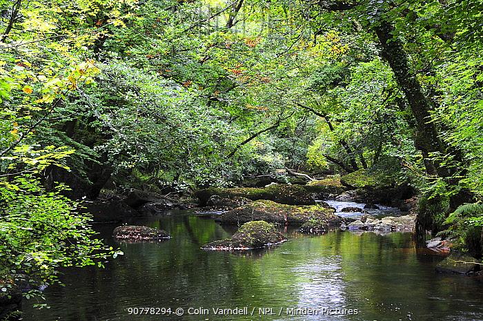 River Bovey in Hannicombe Wood, Dartmoor National Park, Devon,  October 2016