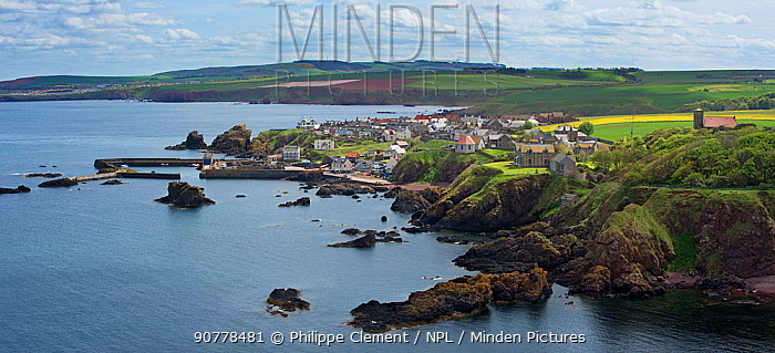 The fishing village of St Abbs seen from the southern side of St Abb's Head, Berwickshire, Scotland, UK, May 2017