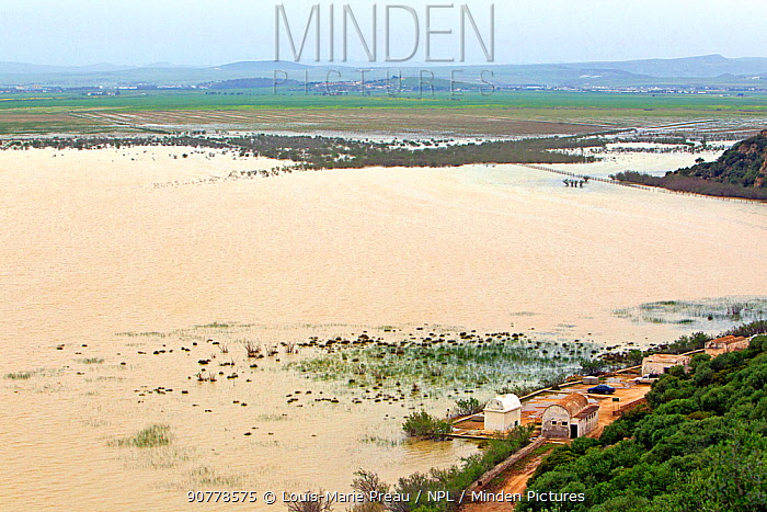 Landscape of Ichkeul National Park UNESCO World Heritage Site, Tunisia, April.