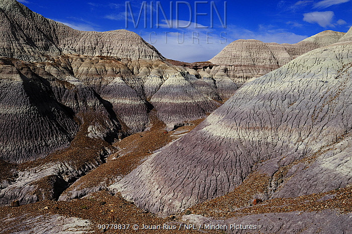 Badlands formations in Blue Mesa, Painted Desert, Petrified Forest National Park, Arizona, USA. April 2014.