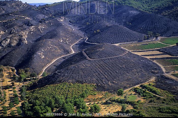 View of extensive area burnt by fire, Plateau de l'Arbois, Aix-en-Provence, France. September 2003.