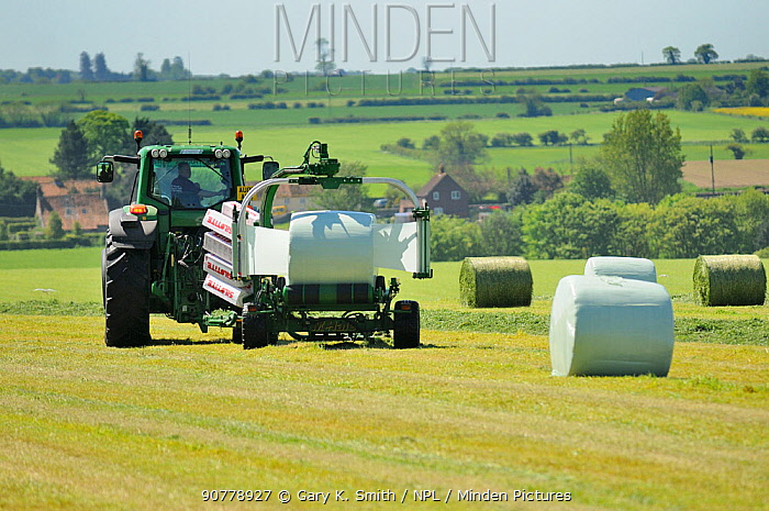 Mechanised haylage harvesting, tractor with appliance for wrapping haylage bales in plastic, Norfolk, UK, May
