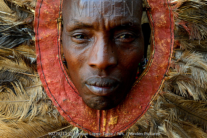 Maasai man wearing raditional headdress, made of ostrich feathers. Amboseli National Park, Masai Mara, Kenya. August 2017.