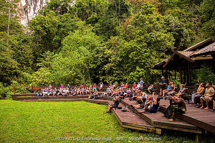 People watching the great bat stream from the outside of the Deer Cave, Gunung Mulu National Park, Borneo, Sarawak, Malaysia.