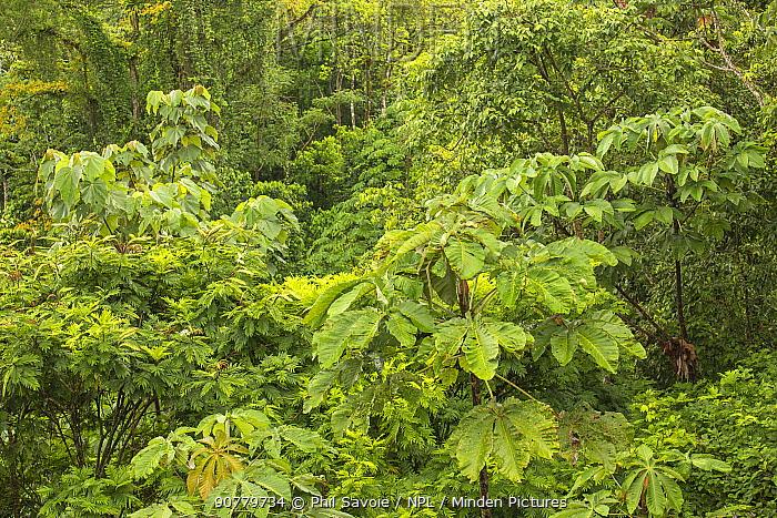 Lowland rainforest, La Selva Field Station, Costa Rica.