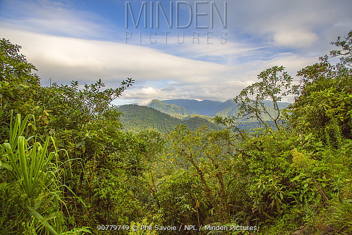Landscape of Talamancan montane forest, Braulio Carrillo National Park, Costa Rica.