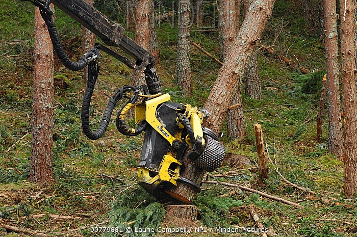 Timber harvesting machine felling and processing conifers, Inverness-shire, Scotland, August 2007