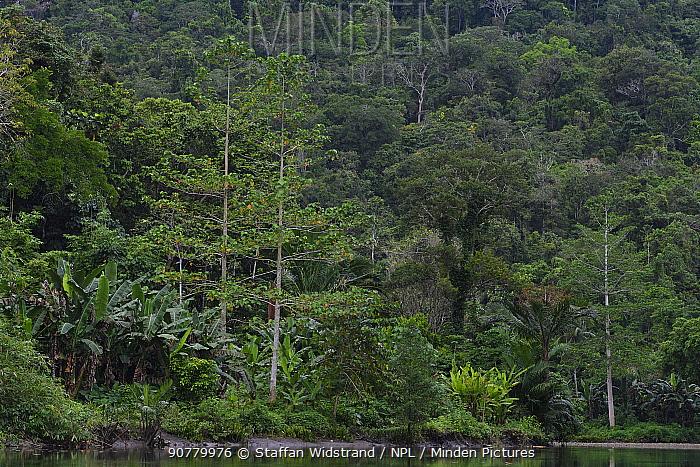 River in rainforest in Misool, Gam river, Raja Ampat, Western Papua, Indonesian New Guinea
