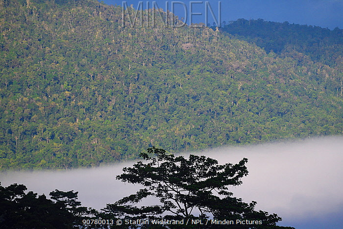 Morning mists in the rainforest near Lobo village, Triton Bay, mainland New Guinea, Western Papua, Indonesian New Guinea