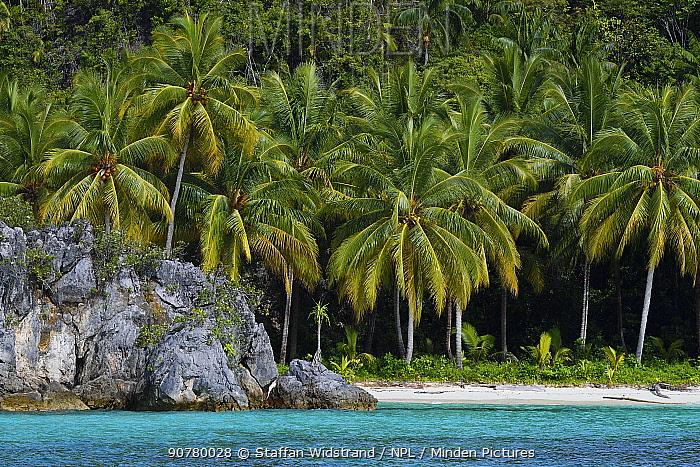 Coconut palm trees (Cocos nucifera) growing along coast by sea, Triton Bay, Mainland New Guinea, Western Papua, Indonesian New Guinea