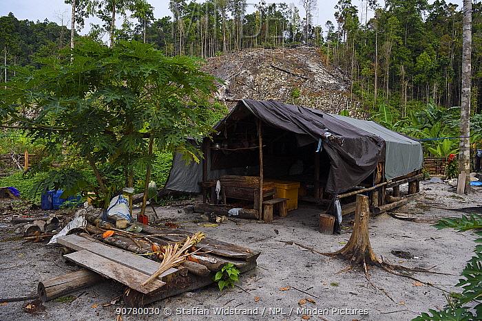 Logging camp/settlement, Karawawi River, Kumawa Peninsula, mainland New Guinea, Western Papua, Indonesian New Guinea