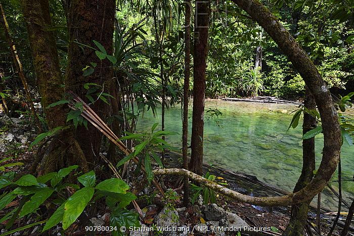 Lowland rainforest, Karawawi River, Kumawa Peninsula, mainland New Guinea, Western Papua, Indonesian New Guinea