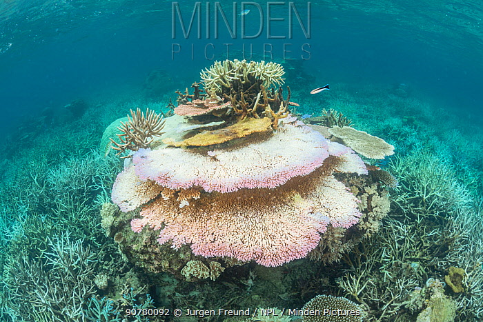 Coral bleaching in the northern Great Barrier Reef, Queensland, Australia March 2017.