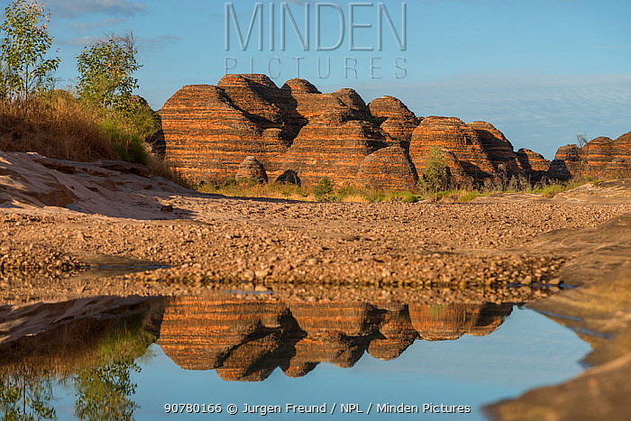 Water reflections in the Bungle Bungle Range, beehive shaped karst sandstone formation formed by erosion, with dark lines formed by cyanobacteria. Purnululu National Park, UNESCO World Heritage Site, Kimberley, Western Australia. June 2016.