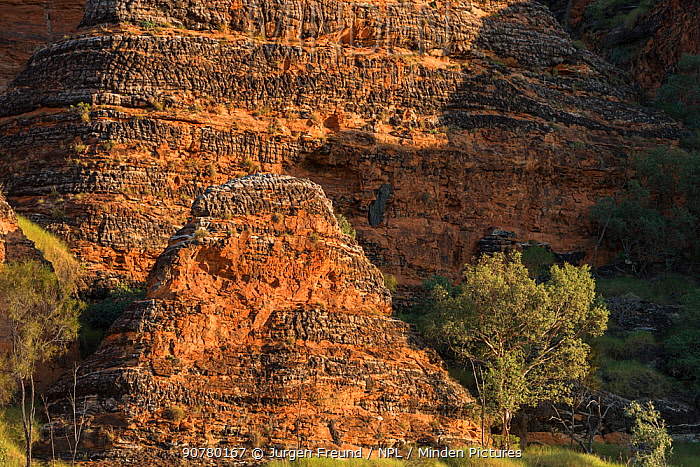 Bungle Bungle Range, beehive shaped karst sandstone formation formed by erosion, with dark lines formed by cyanobacteria. Purnululu National Park, UNESCO World Heritage Site, Kimberley, Western Australia. June 2016.