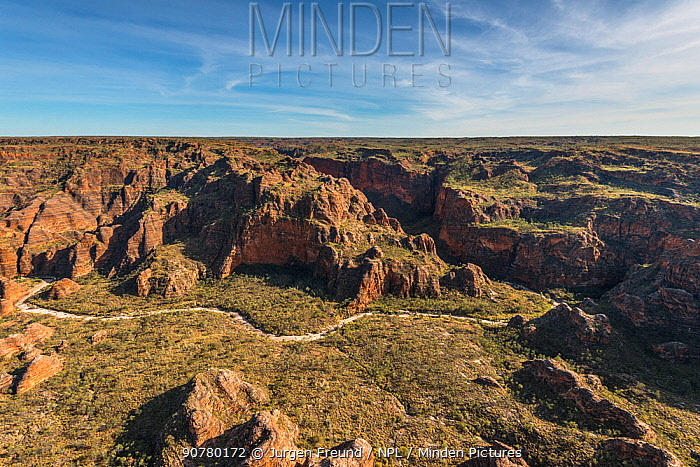 Aerial view of the Bungle Bungles. The rock formations are caused by erosion of karst sandstone, Purnululu National Park, UNESCO World Heritage Site, Kimberley, Western Australia. August 2016.